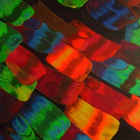 Mikroskopische Ansicht vom Flügel eines Regenbogenfalters, Acryl auf Leinwand, 2013, 70 cm x 50 cm, verkauft